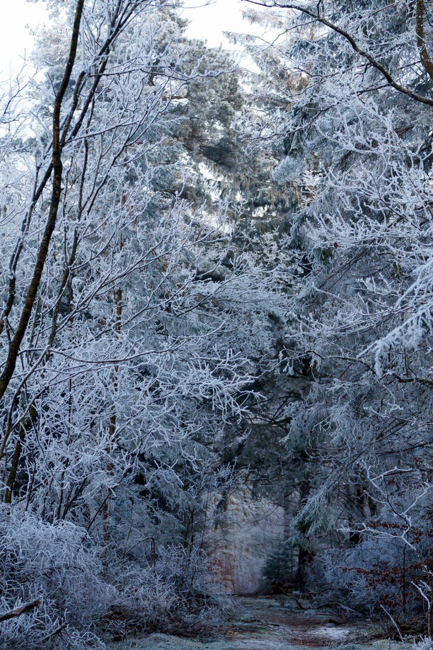 Januar 2017 – Vinter