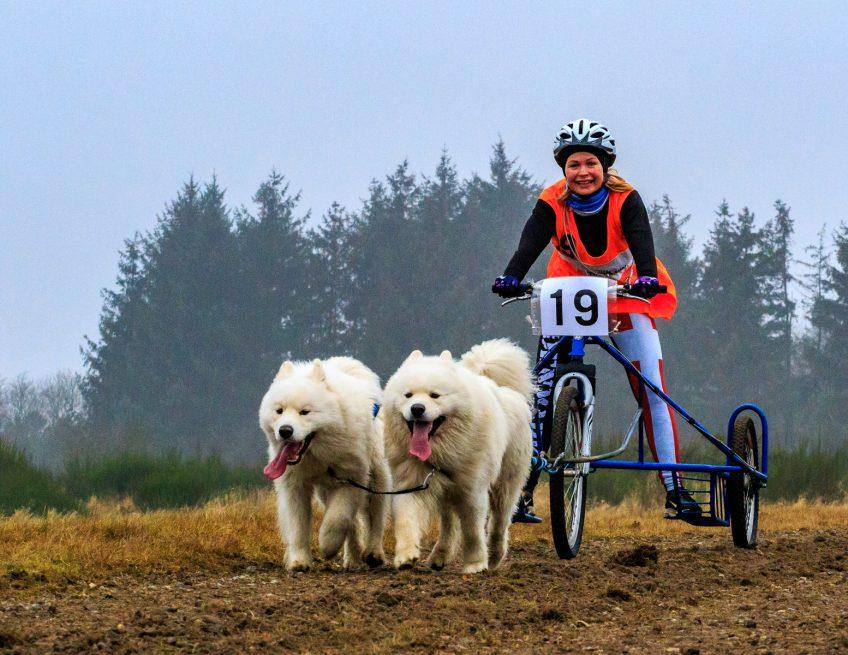 Hundeløb med Dansk Polarhunde Klub