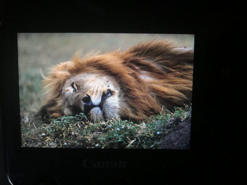En hilsen fra savannen fra Helle Løvevild Golman